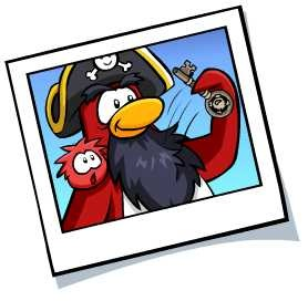 rockhopper_photo